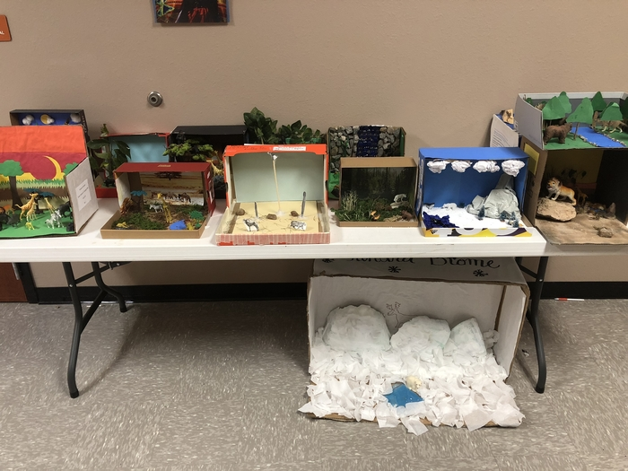 Dioramas in Mrs. Moore's Biology classes.