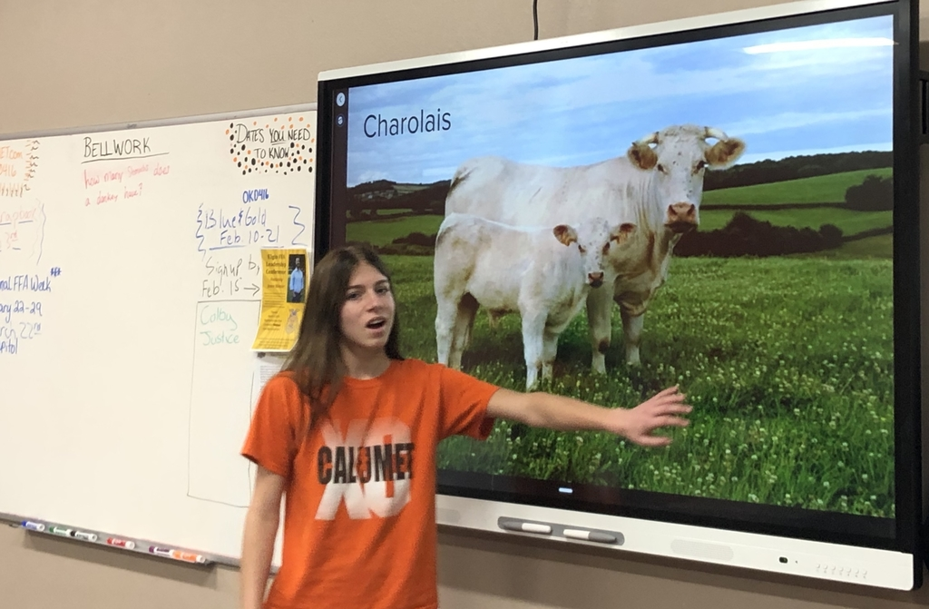 Beef breed presentations